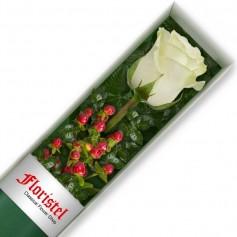 Caja de 1 Rosa Blanca