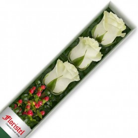 Caja de 3 Rosas Blancas