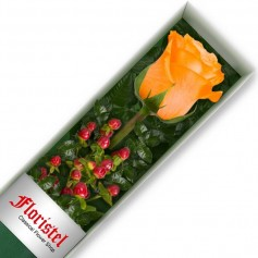 Caja de 1 Rosa Damasco