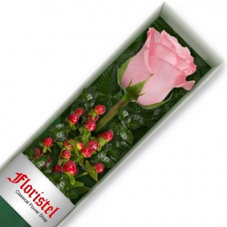 Caja de 1 Rosa Rosada