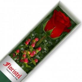 Caja de 1 Rosa Roja