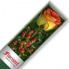 Caja de una Rosa Circus